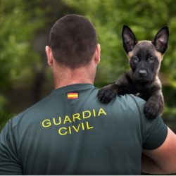 GUARDIA CIVIL 5